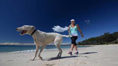 dog gold coast - 子育てにも共通する犬のしつけ法「ポジティブ・レインフォースメント」とは?