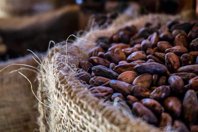 cacao - 最も手軽なスーパーフードはチョコレートだと南オーストラリア大学が証明