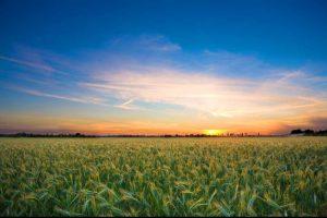Agriclture Australia Japan 300x200 - コロナ禍でも好調なオーストラリア・QLD州の対日農業ビジネスについて農水相に聞いた